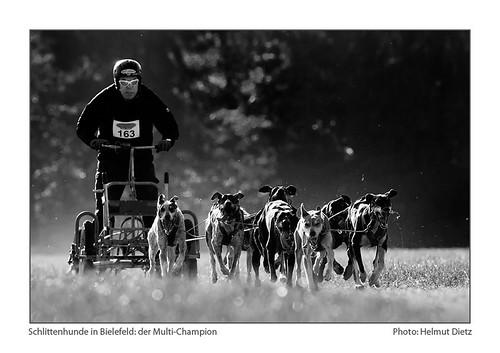 Bielefeld Schlittenhunderennen: Rudi-Ropertz - Photo: Helmut Dietz, Musherzeitung.de, Bielefeld