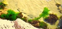 Pesci. (Aldo433) Tags: tampa mare florida pesci spiaggia abruzzo ortona