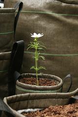 BACSAC nl detail pot 3 liter (meerdangrijs) Tags: outdoor bloempot plantenbak bacsac plantenzakken