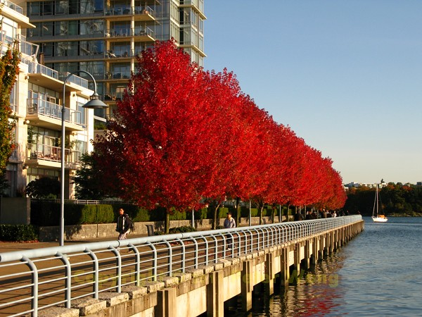 2011 Fall Colour