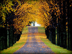 Golden Archway of Leaves (Piscesgirl2~) Tags: autumn trees favorite ontario canada fall nature beautiful leaves photography golden seasons olympus supershot abigfave anawesomeshot absolutelystunningscapes