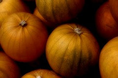 PUMPKIN ANYONE? (craftedfromtheheart) Tags: uk ireland home halloween nature photoshop pumpkin vegetable celebration northernireland veggie veg derry bushmills castlerock coantrim cs5 colondonderry craftedfromtheheart amandakillen roastedpumpkinyum thewitchesaregoingtobeoutinforcetonighthopetheyhavetheirwetweathergear