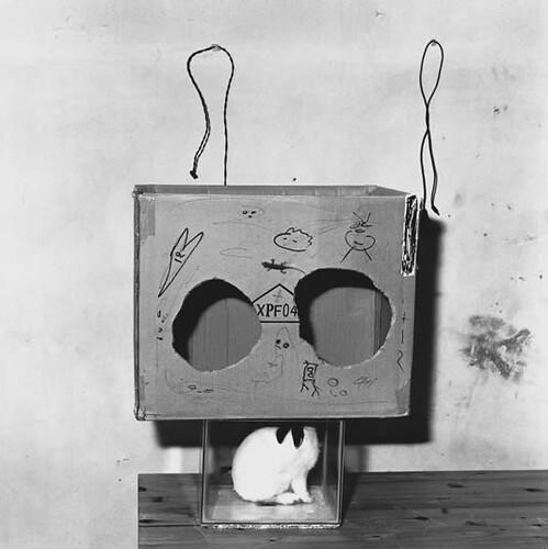 Roger Ballen, Shadow Chamber, Boxed Rabbit, 2002