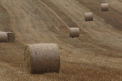 Floating Bales (jillyspoon) Tags: field landscape eos scotland farm farming harvest floating agriculture bales canoneos opticalillusion dumfriesgalloway galloway dumfriesandgalloway machars wigtownshire 60d canon60d southwestscotland