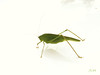 A  visitor on the white car ! (Jean-christophe 94) Tags: shadow macro green nature animal vert ombre jc94 jeanchristophe94