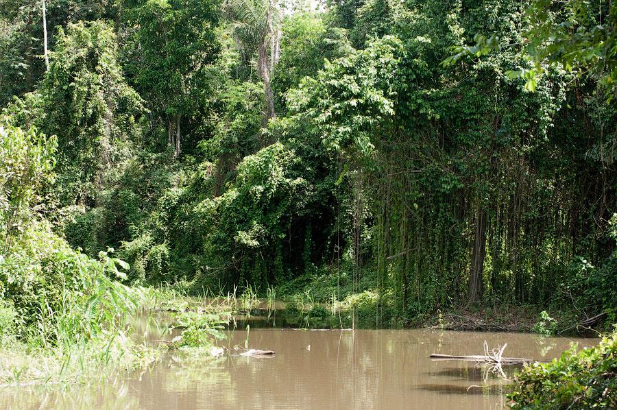 Притоки Амазонки. Амазонка, Перу 2011 © Kartzon Dream - авторские путешествия, авторские туры в Перу, тревел видео, фототуры