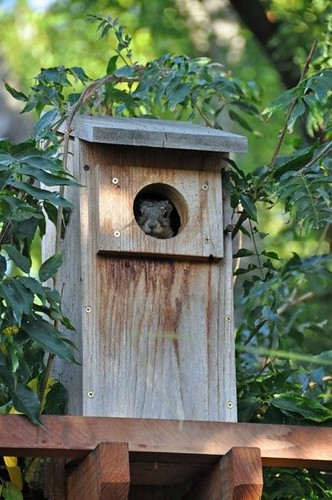 1squirrel in box steve musso wc