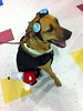 Pumpkins of Anarchy (Mrs Hoffy) Tags: dog pumpkin costume mutt goggles hound target motorcycle mixedbreed petco sidecar 2yearsold sato houndmix