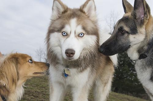 mendoza_dogs_06_62_06_4