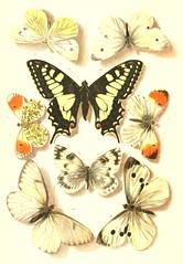 8butterflies