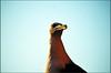 Il Guardiano (M_Verdina) Tags: sky italy nikon italia gull liguria natura giallo cielo nikkor camogli gabbiano uccello d60 nital becco wildnature flickrbronze flickraward flickrestrellas 55300mmvr