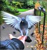 A BIRD IN THE HAND (Shaun's Photographic World.) Tags: birds shaund