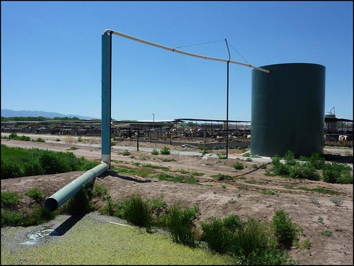 This is example of an anaerobic digester with discharge pipe that feeds into a wetland at the Jarratt Dairy in Los Lunas, New Mexico.