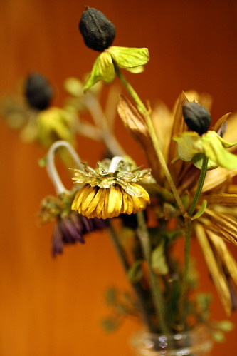 [319/365] Dried Flowers by goaliej54