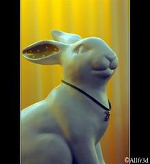 Bunny with style (allfr3d) Tags: sculpture color weird nikon belgium belgique belgi vlaanderen hageland d300s allfr3d