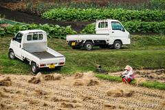 Logistique / Logistic (patoche21) Tags: people japan nikon asia rice farm country asie farmer agriculture ricefield campagne japon ferme riz gens peasant paysan 18200mm fermier nojiriko rizire d80 scnedevie sceneoflife nikonpassion patrickbouchenard
