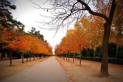 Saturación de Otoño, Parque del Retiro de Madrid. (M Roa) Tags: nature natureza flickraward saariysqualitypictures platinumpeaceaward blinkagain bewiahn