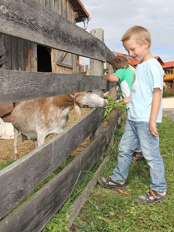Kastanienhof Selz - Junge füttert Ziegen