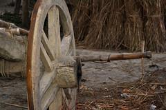 cart (Nupur Dasgupta) Tags: india west nature countryside village gram bengal bangla murshidabad
