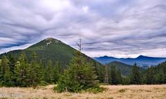 Mount Homjak, Ukraininan Carpathians (tiunsen) Tags: travels mountans  mountaneering  dovbushanka karpatu  ukraininancarpathians mountsyniak