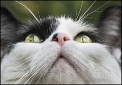Heavens Above (adrians_art) Tags: portrait pets face cat reflections mouth nose eyes furry feline whiskers impressedbeauty