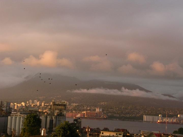vancouver crow migration 006