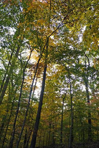 Fall Break Trip to Indiana