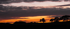 Newtown sunset 2 (Isle of wight Andy) Tags: trees sunset sky tree silhouette clouds landscape fujifilm southcoast magicalskies