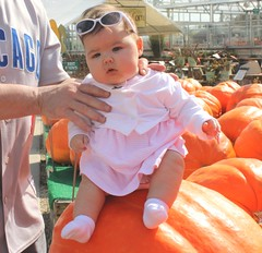 Violet doesn't know what to make of the pumpkin farm. (Lynn 3nglish, catching up) Tags: pumpkinfarm topshots lovelylovelyphoto violetdaddy