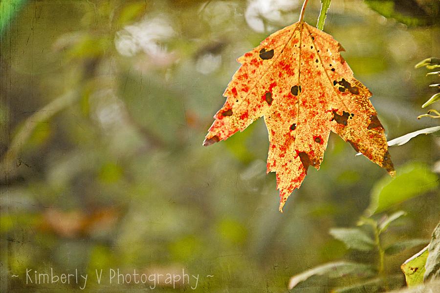 Leaves2-edit-texture