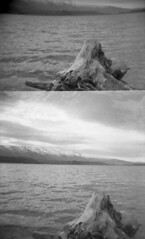 Lake Dunstan / Central Otago / New Zealand (Matthew McCutcheon) Tags: blackandwhite bw lake 6x6 film matt holga lomo lomography log matthew epson quintin 120mm rollfilm bwf v700 mccutcheon 120gn