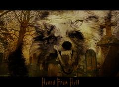 Hell Hound (jodispayne.....Mostly off :() Tags: halloween graveyard sheltie sheepdog hell hound graves creepy sammy shetland picnik