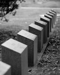 Titanic Headstones (mrsvilveyachke) Tags: blackandwhite cemetery graveyard headstones halifax titanic tombstones gravestones