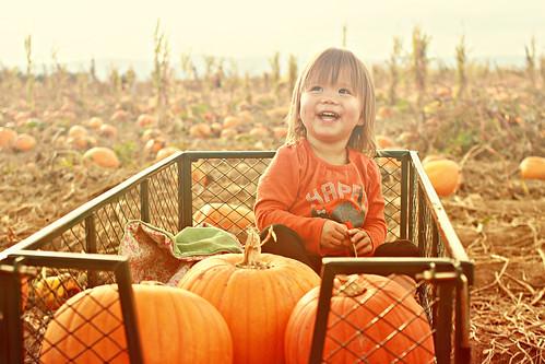 pumpkinpicking2