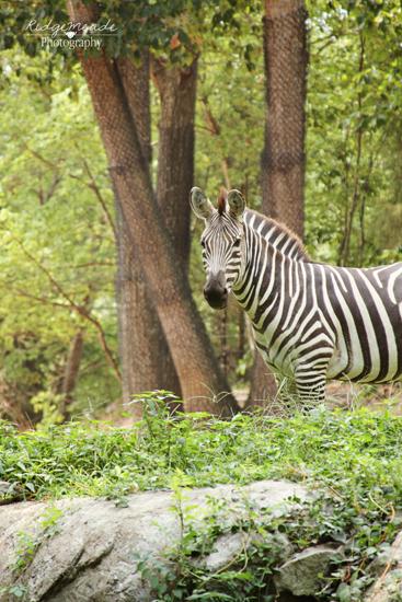 NC Zoo #8