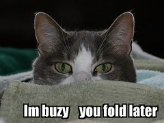 My first Lolcat (SteveProsser) Tags: canon50mmf18 lolcat bighugelabs canon40d