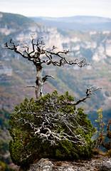 IMG_7931 (lcnb) Tags: automne ciel 5d canon5d nuages gorges falaises millau languedocroussillon jonte aveyron couvert gorgesdutarn lozre gorgesdelajonte luccombettes