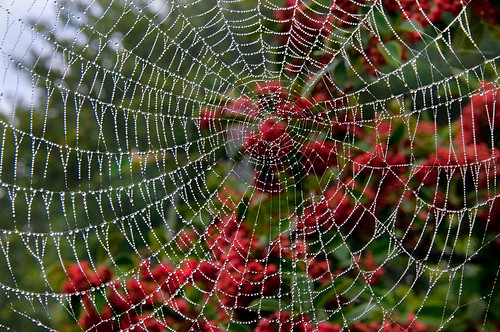 Wet Web by Harold Davis