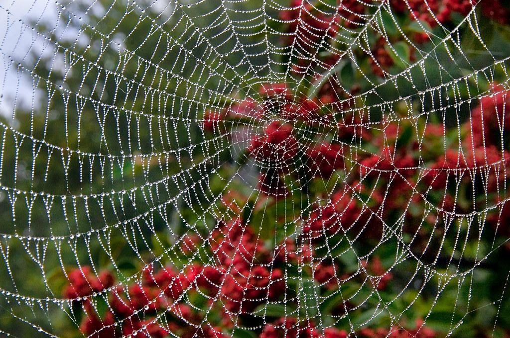 Wet Web © Harold Davis