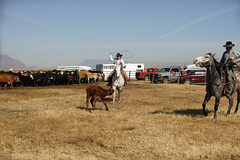 Cowgirl (0803-cl) (VFR Rider) Tags: ranch horses horse oregon canon cowboy branding adel eos1ds lakecountyoregon adeloregon