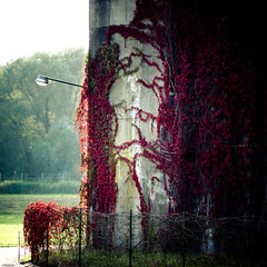 arts vivants (=Я|Rod=) Tags: autumn fall 6x6 wall fence square polaroid concrete herbst creepy explore crop ww2 lantern zaun laterne 44 virginiacreeper lightroom farge preset wilderwein ubootbunker bunkervalentin panasonic45200 lumix45200 olympusepl1