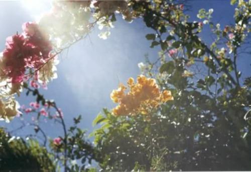10 floral