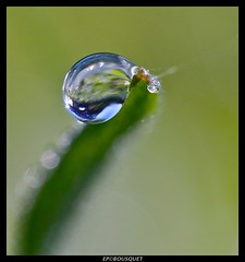 La chute / A fall (Orpinbleu) Tags: macro nature water canon garden daylight photo eau flickr photos corse corsica jardin images drop galerie h2o zen liquid goutte 2a lumen liquide macrophotography lumirenaturelle photogallery leau dropofwater gouttedeau corsedusud gouttesdeau macrophotographie 2013 flickrduel macrodrops macrodroplets chutegouttedeau orpinbleu february2013 fvrier2013 anneinternationalepourlacooprationdansledomainedeleau2013 internationalyearforcooperationinthefieldofwaterpolicy2013 orpinbleumacrozen albumgouttesdeauorpinbleu photoalbumdropsofwaterorpinbleu gouttesdepluieetderose