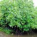 Mangroves-13