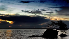 #850C5258- There is a tree living on a rock (crimsonbelt) Tags: sunset tree beach silhouette rock clouds balikpapan batubatu melawai