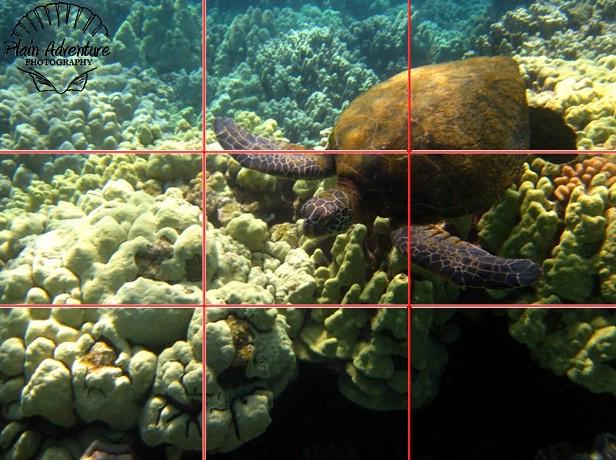 onethird sea turtle