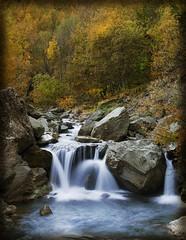 Giochi d'acqua (celestino2011) Tags: alberi fiume natura val giallo autunno colori giochi dacqua pellice