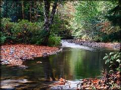 Cougar Creek (TT_MAC) Tags: creek landscape stream cougarcreek fallcreeknature