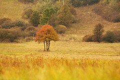 So Far Away (icemanphotos) Tags: autumn trees tree colors field forest canon landscape 350d interestingness interesting scenery hungary view hill iceman magyar zempln icemanphotos