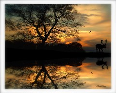At the break of day (Steel Steve) Tags: sunset reflection silhouette deer